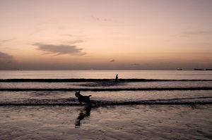 beach running dogs